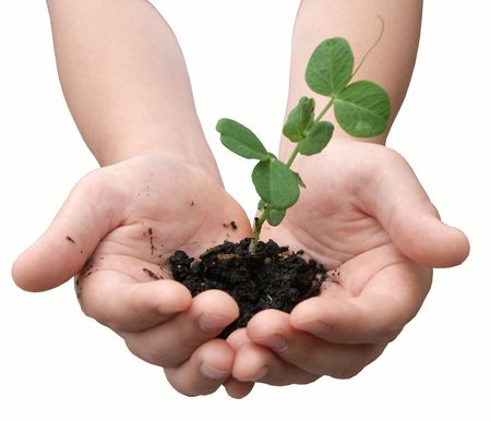 Hands with a small plant isolated on white Stock Photo