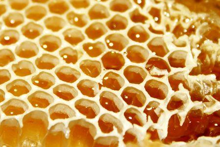 Honeycomb with shiney honey photo