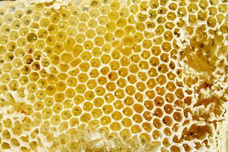Honeycomb with honey Reklamní fotografie