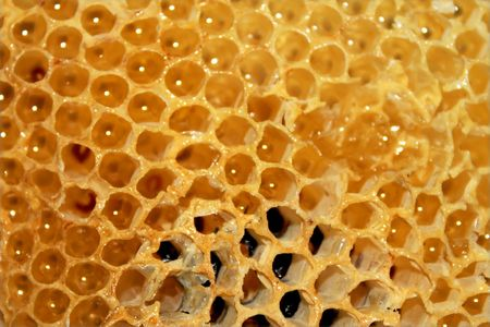honey comb: Orange honeycomb with honey in it