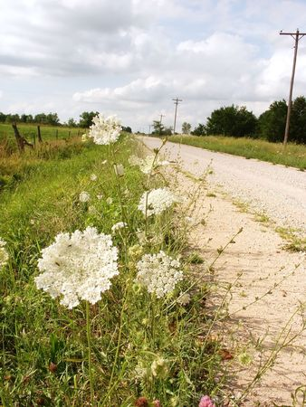 Country road with white umbrella flowers Stock Photo