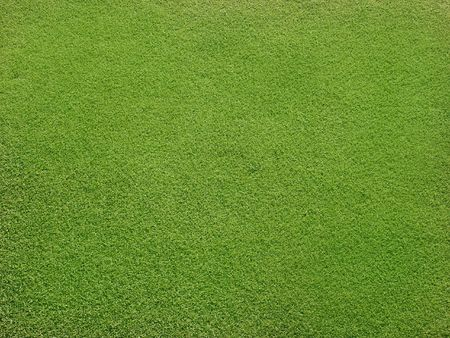 Field with beautiful green grass Imagens - 6185627