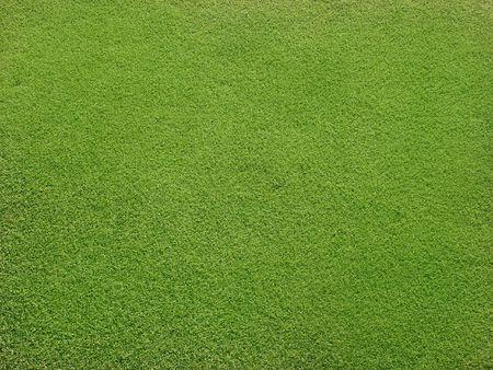 Field with beautiful green grass