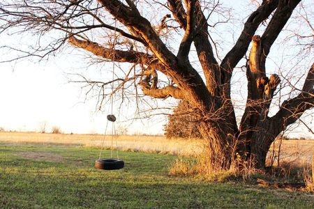 Tire swing on a large tree photo
