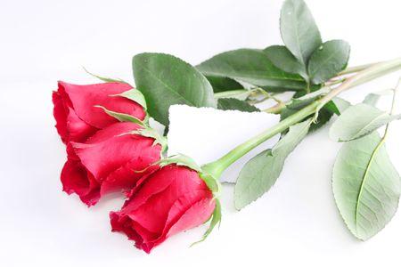 Roses Imagens