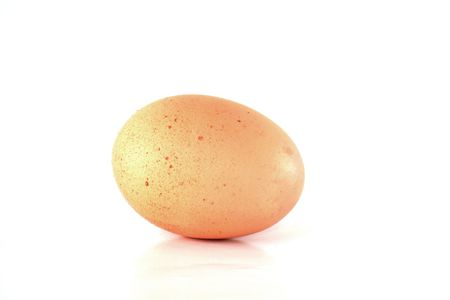 One brown egg on white photo
