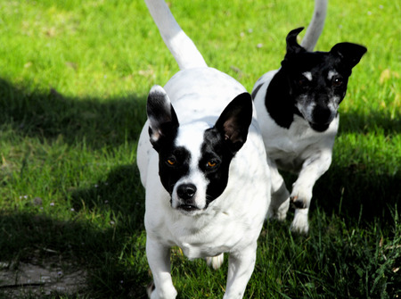 TWO DOGS Stock Photo - 1470140