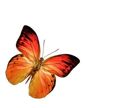 butterfly stationary: butterfly