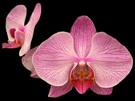 FLORAL..ORCHIDS Stock Photo - 2572386