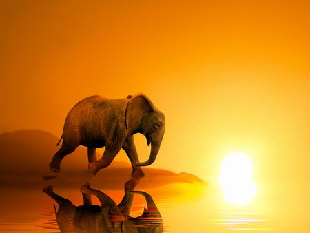 ELEPHANT AT SUNSET ILLUSTRATION Stock Photo