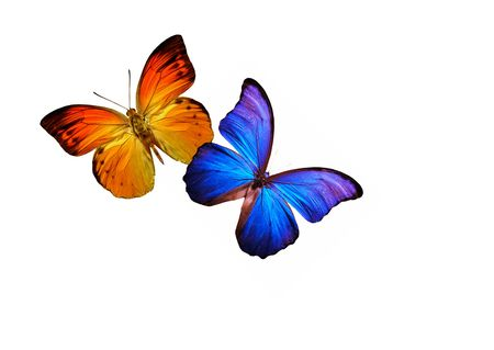 color butterfly: BUTTERFLIES