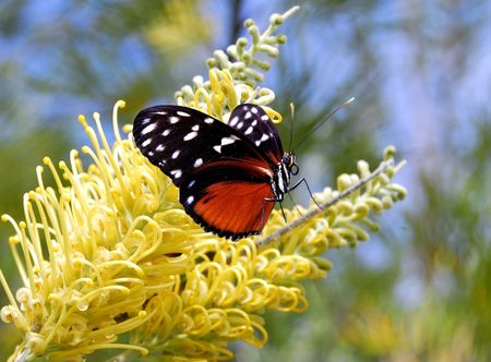 Butterfly on flower Stock Photo - 2757709
