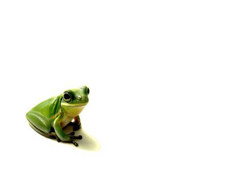 grenouille verte: Green Frog isol�s