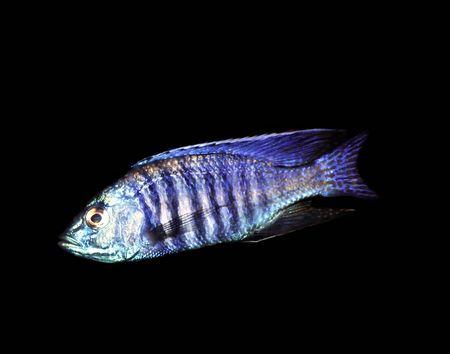fishy: Blue fish