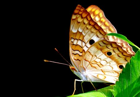 Butterfly Stock Photo - 3378637