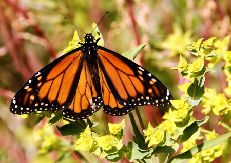BUTTERFLY Stock Photo - 3713761