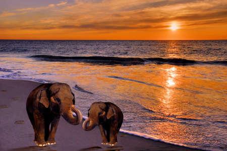 scenarios: ELEPHANTS AT SUNSET BEACH Stock Photo