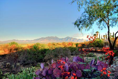 arizona landscape: Southwest Landscape