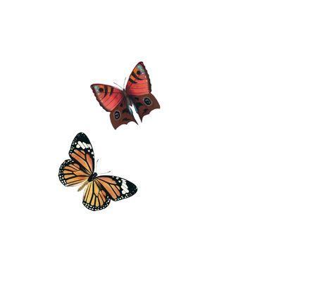 Butterflies Illustration Stock Illustration - 5923335