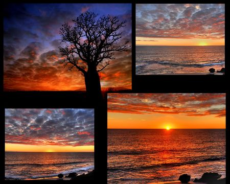 under the sea: Sunset Collage