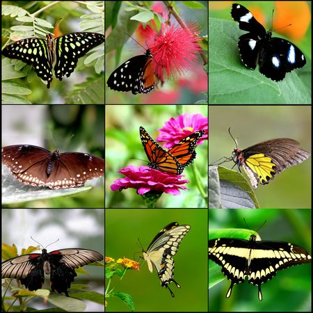 Butterfly Collage Stock Photo - 7383886