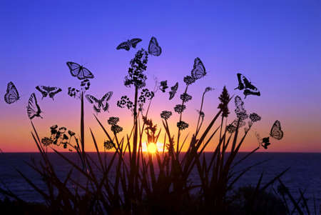 Butterflies Landscape Illustration illustration