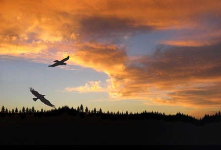 bird flying: Eagles at Sunset