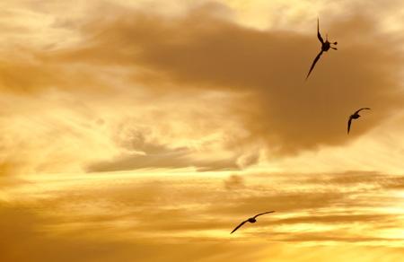 Three birds in flight at sunset. photo