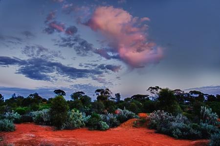 scrub grass: Australian Desert at Sunrise
