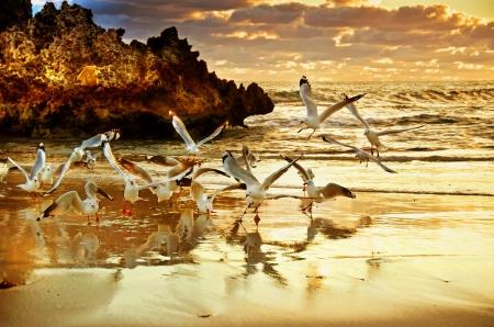 australian animal: Dos rocas de Perth en Australia Occidental
