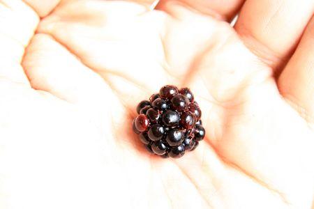 Hand Holding a Fresh Blackberry photo