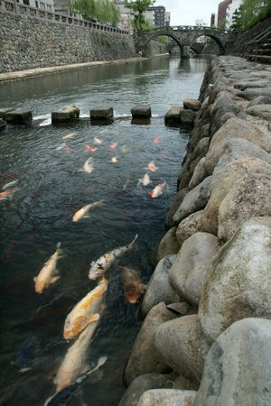 coy fish: Coy Carp - Spectacles Bridge, Nagasaki, Japan, Asia