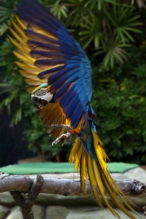 Parrot - Ocean Park, Hong Kong photo