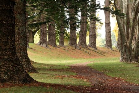Cornwall Park - Auckland, New Zealand Stock Photo