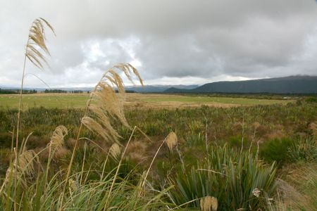 tongariro: Grassland and Mountains - Tongariro National Park, New Zealand