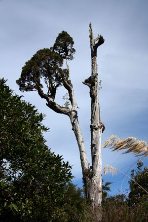 tongariro: Tongariro National Park, New Zealand