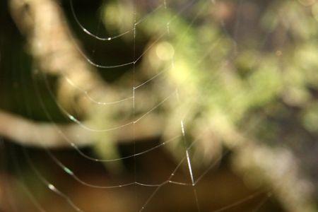 tongariro: Ara�as web - Parque Nacional de Tongariro, Nueva Zelanda