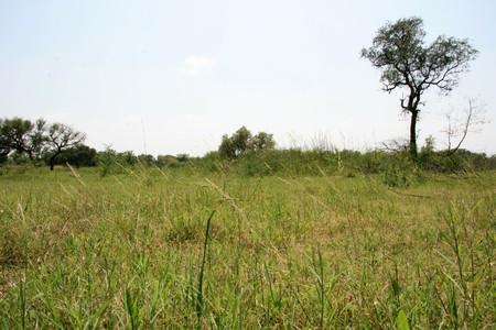 bird sanctuary: Keoladeo National Park (Bird Sanctuary) in Rajasthan, India Stock Photo