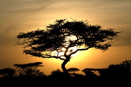 Sun Setting over Serengeti Wildlife Conservation Area, Safari, Tanzania, East Africa Stock Photo