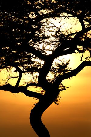 wildlife conservation: Sun Setting over Serengeti Wildlife Conservation Area, Safari, Tanzania, East Africa Stock Photo