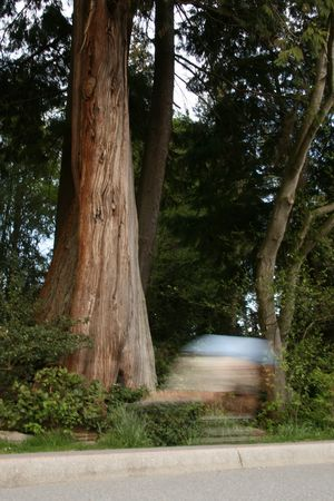 blader: Stanley Park, One of the Largest Urban Parks in The World - Vancouver, BC, Canada