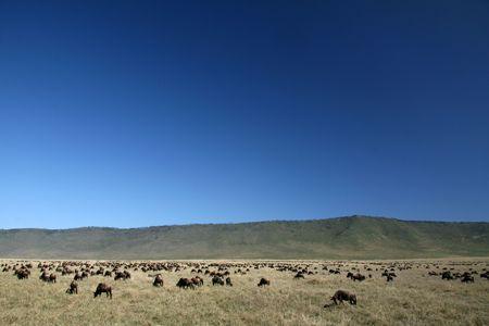 Ngorongoro Crater, Nature Reserve in Tanzania, East Africa photo