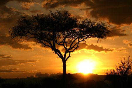 Tarangire National Park - 탄자니아, 아프리카의 야생 동물 보호 구역 스톡 콘텐츠
