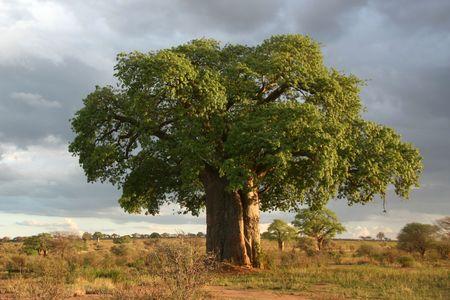 Tarangire National Park - Wildlife Reserve in Tanzania, Africa photo