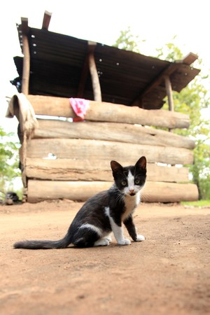Kitten - Remote Untouched Area of Western Uganda, Africa photo