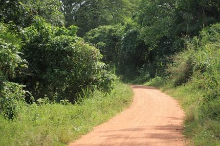 Bigodi Wetlands in Uganda - The Pearl of Africa photo