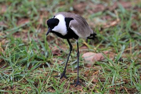 ngamba: Bird - Wildlife Sanctuary, Game Reserve - Uganda, East Africa