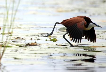 Wildlife at the Bisina Wetlands in Uganda - The Pearl of Africa photo