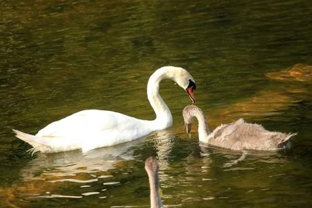White Swan - City of London, England photo