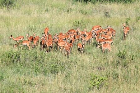 maasai mara: Maasai Mara National Park in Kenya, Africa Stock Photo